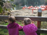 Dueling Ponytails with Flamingos